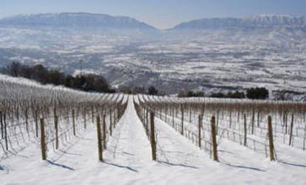 do-costers-segre vinyes nevades